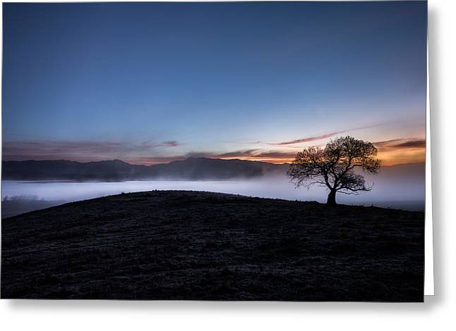 Back Country Greeting Cards - Cottonwood and morning mist Greeting Card by Alexander Kunz