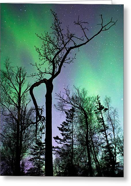 Wasilla Greeting Cards - Cottonwood Aurora Greeting Card by Ron Day