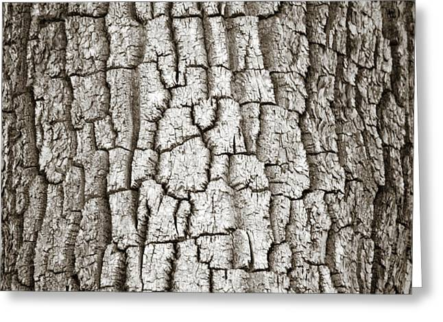 Cottonwood Bark 1 Greeting Card by Marilyn Hunt
