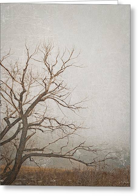 Julie Magers Soulen Greeting Cards - Cottonwood Fog Greeting Card by Julie Magers Soulen
