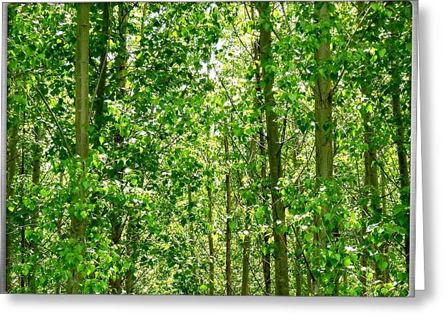 Lush Green Greeting Cards - Cottonwood Forest Greeting Card by Will Borden
