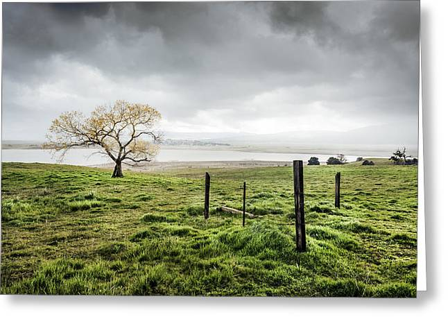 Raining Greeting Cards - Cottonwood in Spring Storm Greeting Card by Alexander Kunz