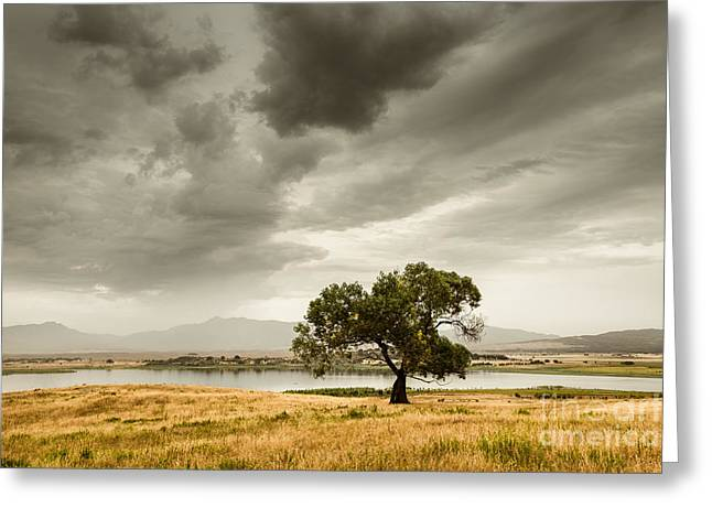 Back Country Greeting Cards - Cottonwood Monsoon Greeting Card by Alexander Kunz