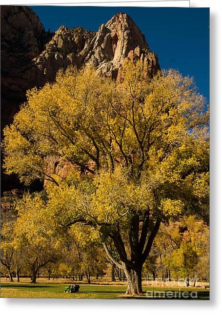 Geobob Greeting Cards - Cottonwood Tree Grandeur at Zion Lodge Utah Greeting Card by Robert Ford