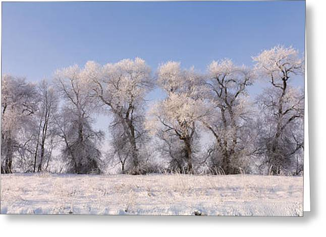 Siskiyou County Greeting Cards - Cottonwood Trees Covered With Snow Greeting Card by Panoramic Images