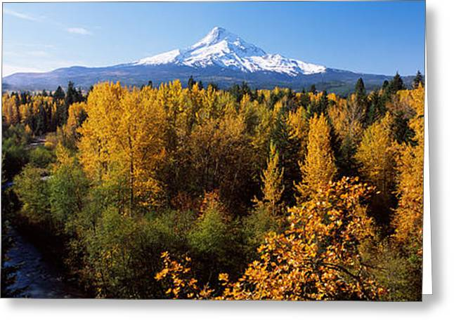 Mt Hood Greeting Cards - Cottonwood Trees In A Forest, Mt Hood Greeting Card by Panoramic Images