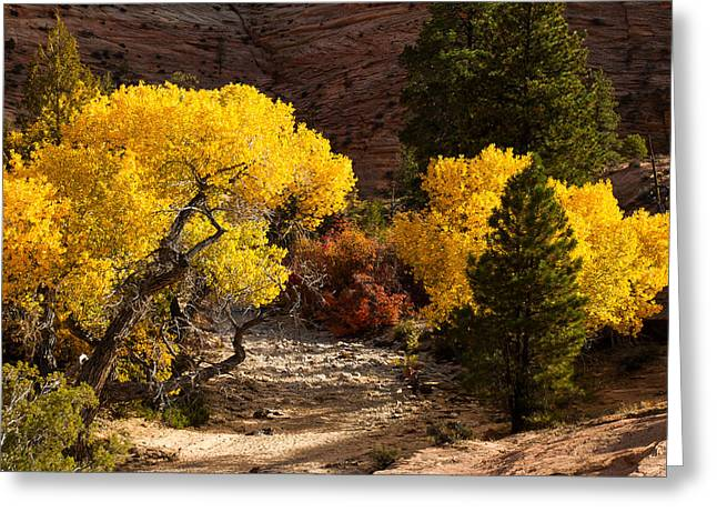Geobob Greeting Cards - Cottonwoods and Dry Wash Zion National Park Utah Greeting Card by Robert Ford