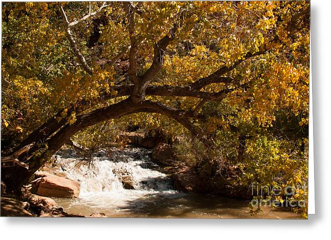 Geobob Greeting Cards - Cottonwoods and Waterfalls Virgin River Zion National Park Utah Greeting Card by Robert Ford