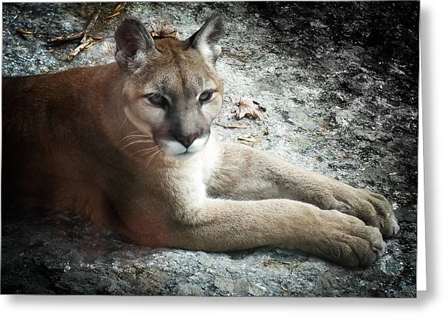Cougar Country Greeting Card by Karen Wiles
