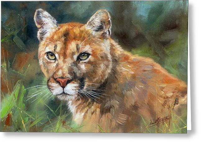 Cougars Greeting Cards - Cougar Greeting Card by David Stribbling