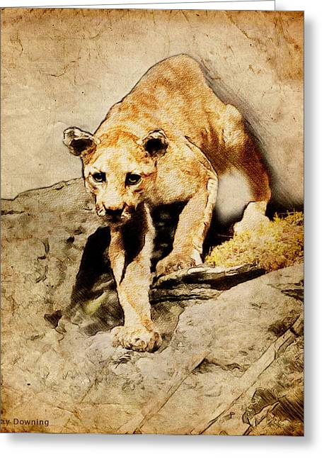 Americana Pictures Greeting Cards - Cougar Hunting Greeting Card by Ray Downing