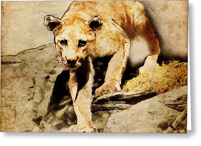 Cougar Hunting Greeting Card by Ray Downing