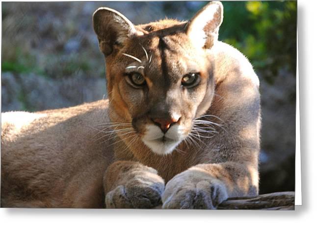 Cougar II Greeting Card by DiDi Higginbotham