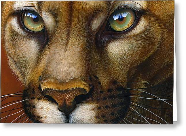 Wild Cats Paintings Greeting Cards - Cougar October 2011 Greeting Card by Jurek Zamoyski