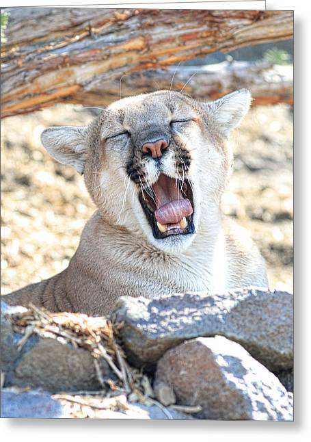 Growling Greeting Cards - Ohhh Home on The Range Greeting Card by Steve McKinzie