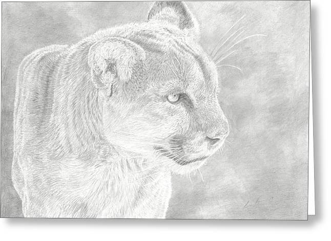 Nose Drawings Greeting Cards - Cougars Gaze Greeting Card by Laura Klassen