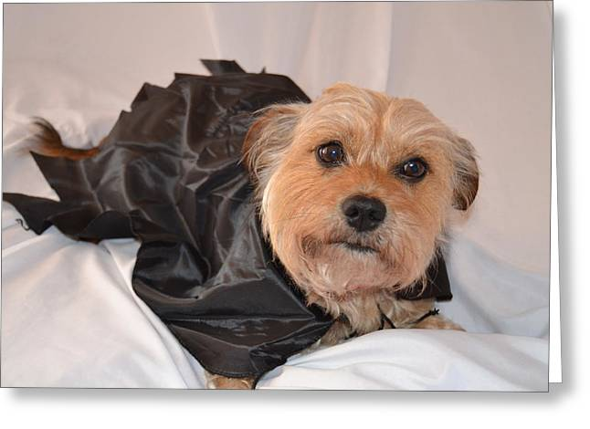 Brown Dog Greeting Cards - Count Chester Greeting Card by Kim Stafford