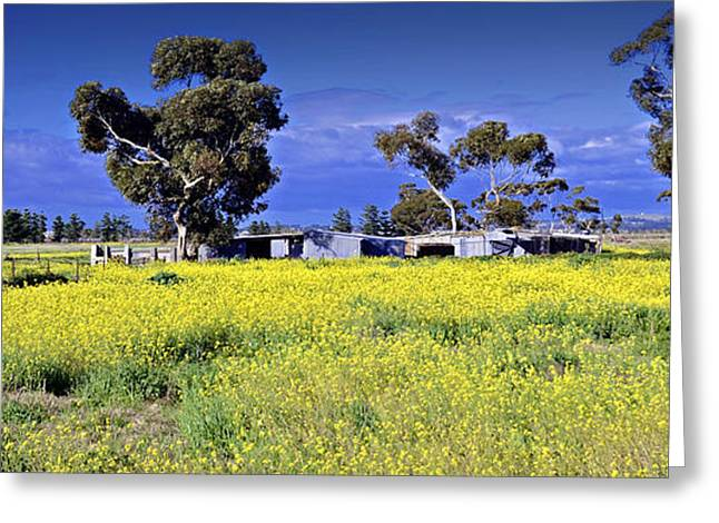 Sheds Greeting Cards - Country Australia  Greeting Card by Damian Morphou