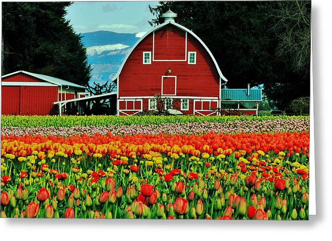 Biological Greeting Cards - Country Charm Greeting Card by Benjamin Yeager