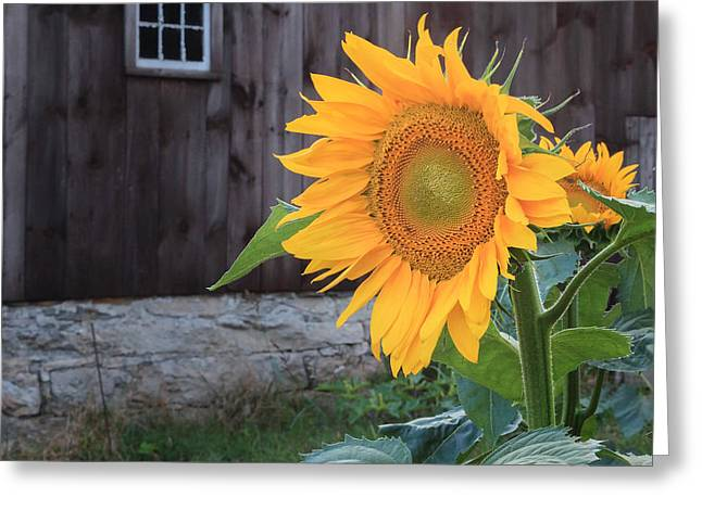 Country Flower Square Greeting Card by Bill Wakeley