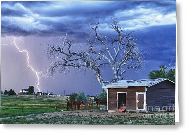 Lightning Strike Greeting Cards - Country Horses Lightning Storm NE Boulder County CO HDR Greeting Card by James BO  Insogna