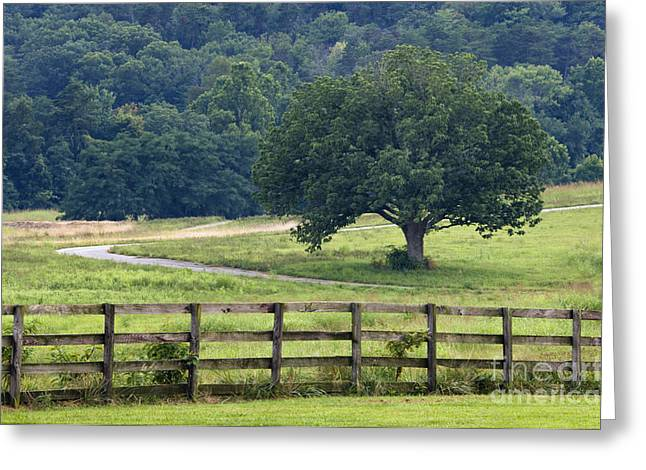 Board Fence Greeting Cards - Country Lane - D008558 Greeting Card by Daniel Dempster
