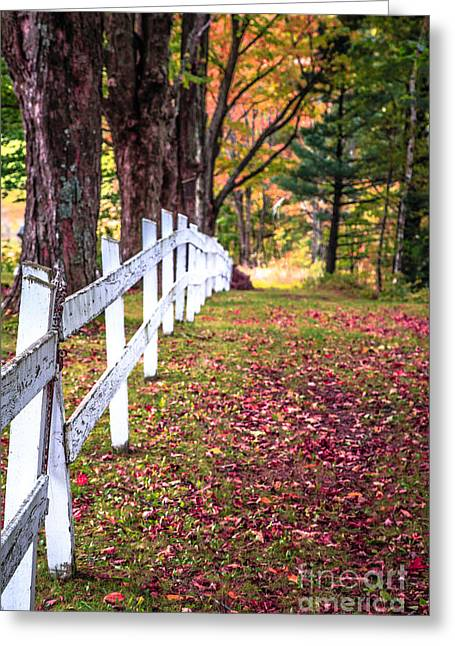 Country Lane Fall Foliage Vermont Greeting Card by Edward Fielding