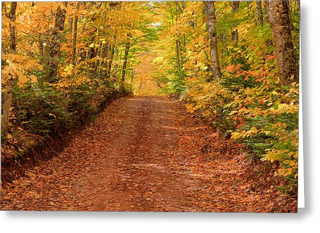 Fallen Leaf Greeting Cards - Country Lane in Autumn Greeting Card by Matt Dobson