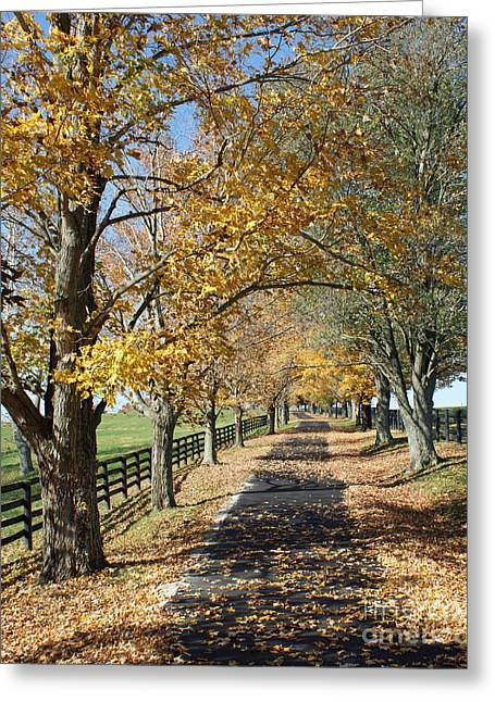 Kentucky Horse Park Photographs Greeting Cards - Country Lane Greeting Card by Roger Potts