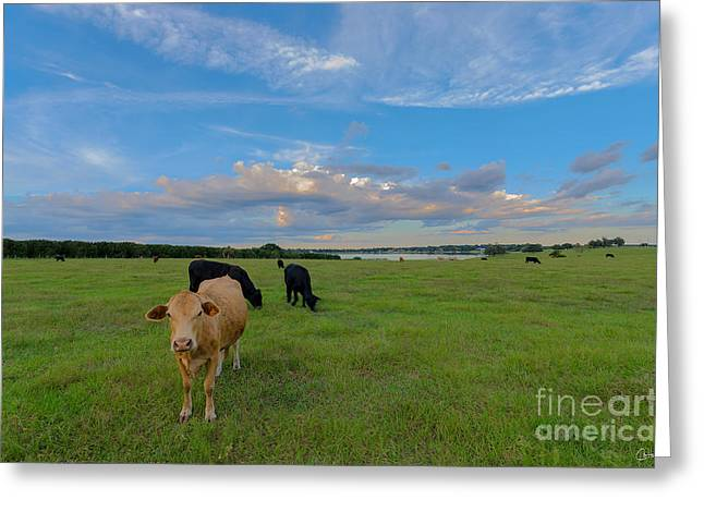 Auburndale Greeting Cards - Country Life Greeting Card by Carlitos Cintron