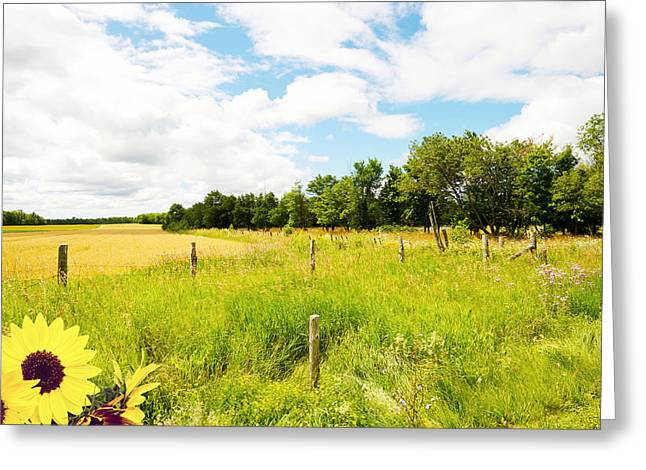 Manitoulin Greeting Cards - Country Life. Greeting Card by Kelly Nelson
