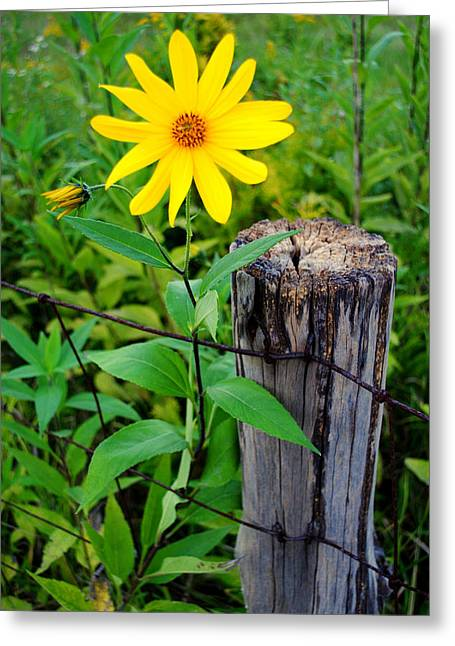 Botony Greeting Cards - Country Living Greeting Card by Frozen in Time Fine Art Photography