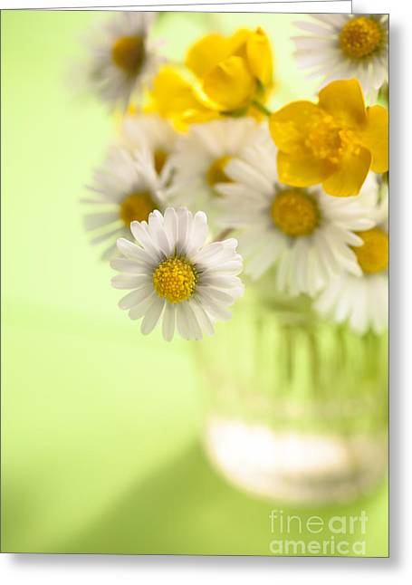 White Daisy Greeting Cards - Country Posy Greeting Card by Jan Bickerton