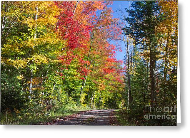 Fall Colors Greeting Cards - Country Road NY Greeting Card by Chris Scroggins