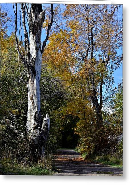 Autumn In The Country Greeting Cards - Country Road P2 Greeting Card by Rae Ann  M Garrett