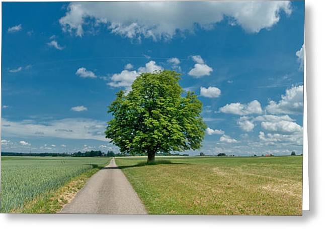 Is The Way Greeting Cards - Country Road Passing Through A Field Greeting Card by Panoramic Images