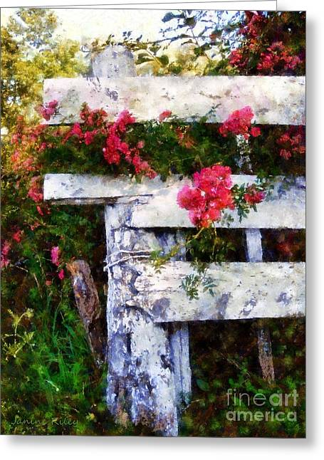 Country Chic Greeting Cards - Country Rose on a fence 2 Greeting Card by Janine Riley