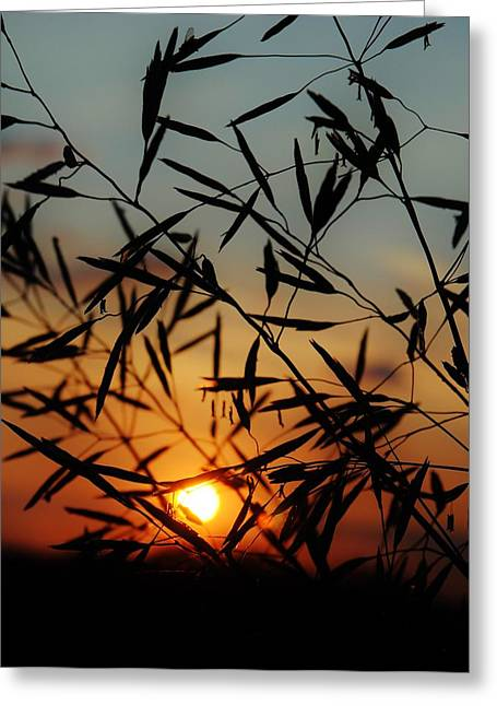 Pasture Scenes Mixed Media Greeting Cards - Country Sunset 2 Greeting Card by Todd and candice Dailey