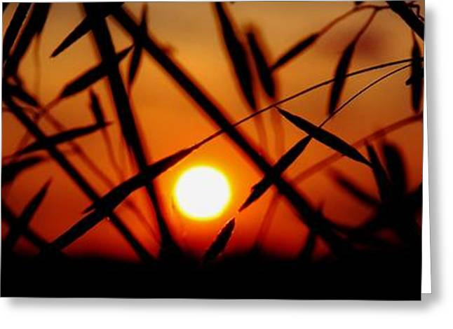 Pasture Scenes Mixed Media Greeting Cards - Country Sunset Greeting Card by Todd and candice Dailey