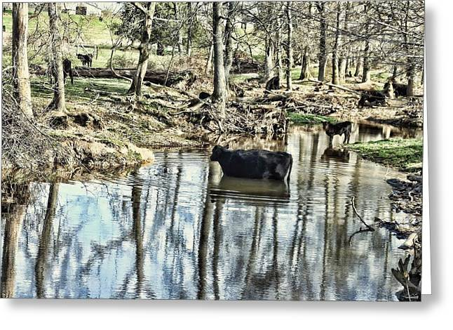 Black Angus Calf Greeting Cards - Countryside Cow - Curly Greeting Card by Lesa Fine