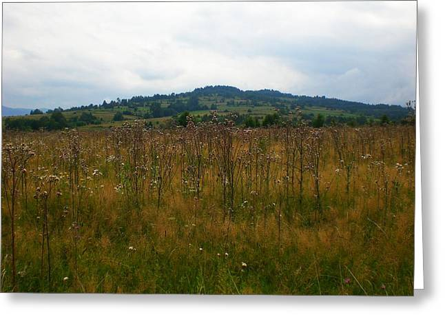 Poland Greeting Cards - Countryside Greeting Card by Nathalie Hope
