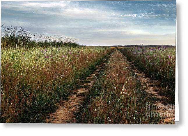 Countryside tracks Greeting Card by Carlos Caetano