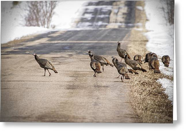 Meleagris Gallopavo Greeting Cards - County Road Crew Greeting Card by Thomas Young
