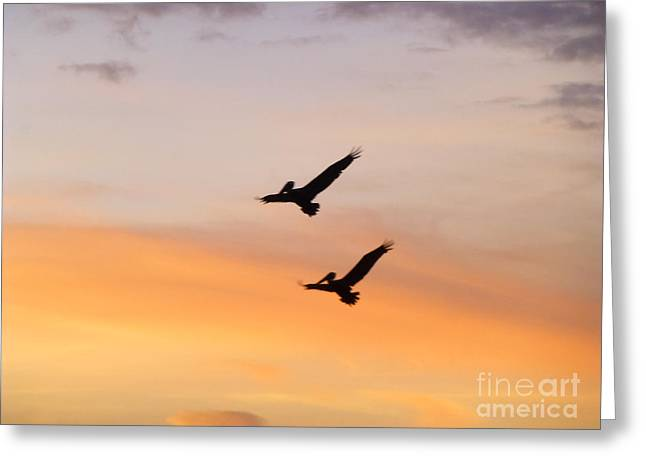 Couple Pyrography Greeting Cards - Couple of Brown Pelicans in Flight Greeting Card by Nicole Beland