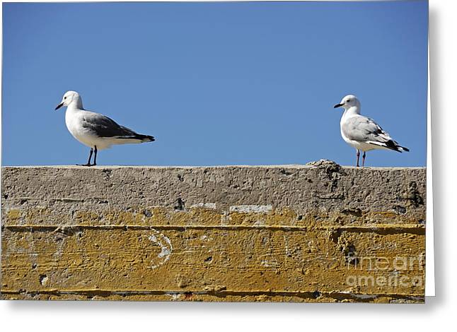 Surrounding Wall Greeting Cards - Couple of Seagulls on a wall Greeting Card by Sami Sarkis