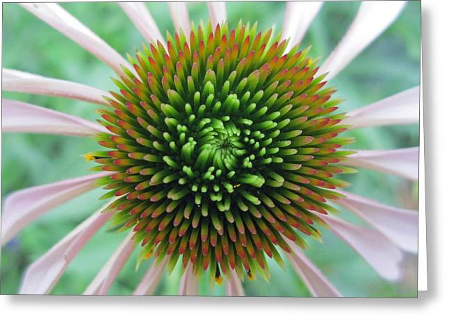 Abstracted Coneflowers Greeting Cards - Courageous Greeting Card by Mike Podhorzer