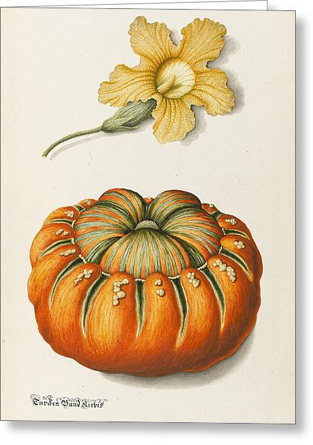 Botanical Greeting Cards - Courgette And A Pumpkin Greeting Card by Joseph Jacob Plenck