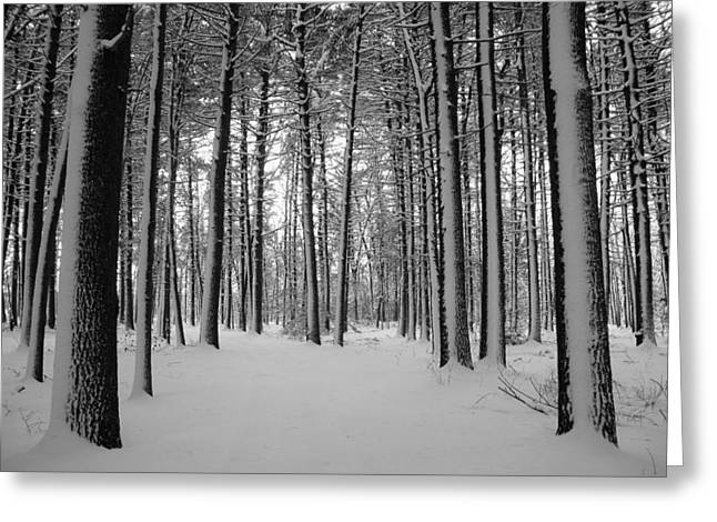 Snow Scene Landscape Greeting Cards - Covered Greeting Card by Andrea Galiffi