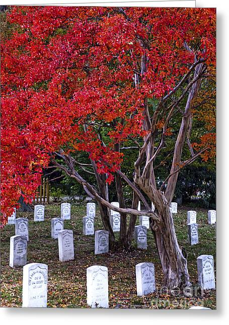 Arlington Greeting Cards - Covered in Fall Colors Greeting Card by Paul W Faust -  Impressions of Light