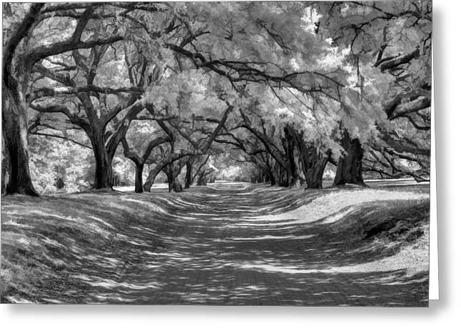 Cape Fear River Greeting Cards - Covered Passage Greeting Card by Dan Carmichael